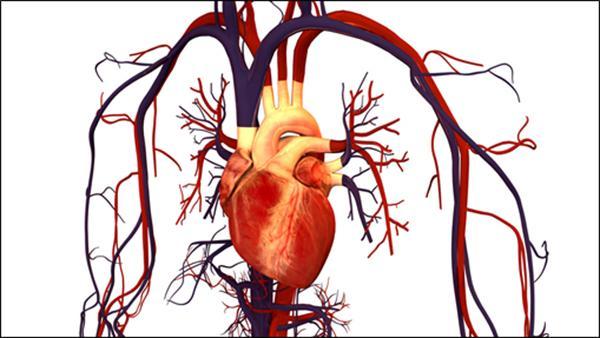 importantes avances en la comprensin de la actividad elctrica del corazn