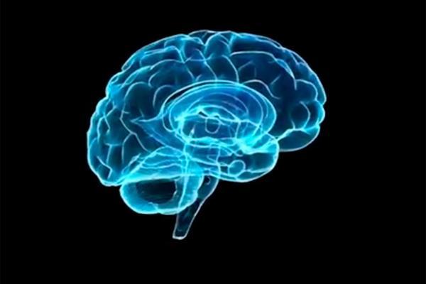 descubren un nuevo rol del colesterol para regular las proteinas cerebrales