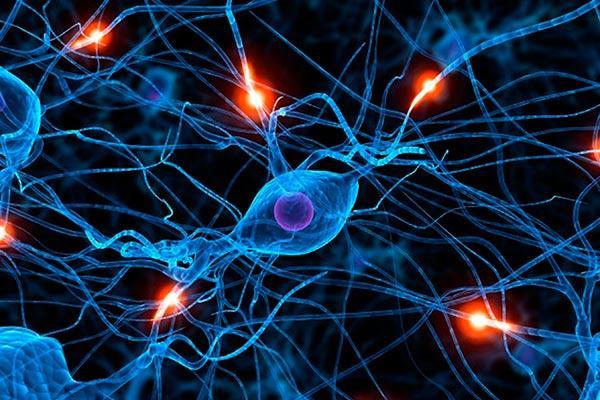 hallan un mecanismo gentico que desencadena la degeneracin neuronal en el alzhimer