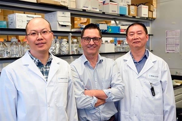 la molcula slamf7 es clave en la eficacia de la inmunoterapia en los cnceres hematolgicos