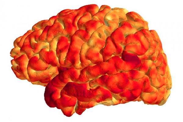 el sistema inmunitario y la estructura y funcion cerebrales estan controlados por los genes comunes