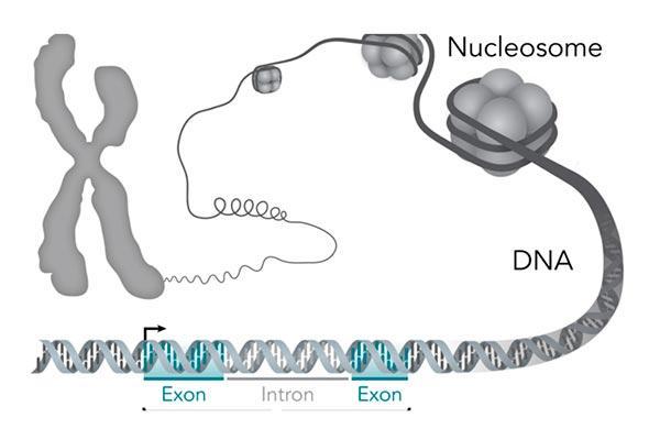 la mayora de las enfermedades estn influenciadas por miles de genes