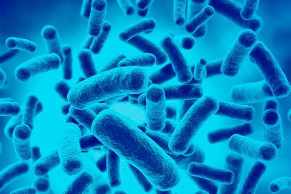 los probioticos podrian ayudar a mejorar la respuesta al tratamiento en los pacientes oncologicos