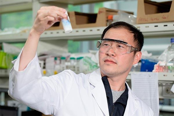 la remocin de las clulas senescentes podra retrasar la aparicin de enfermedades relacionadas con la edad