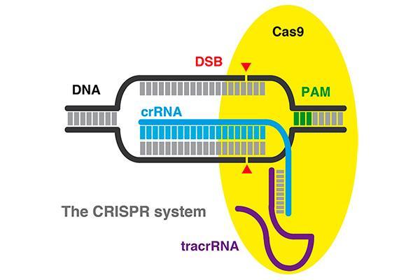 cientificos europeos exigen un uso responsable de las nuevas herramientas de edicion genetica