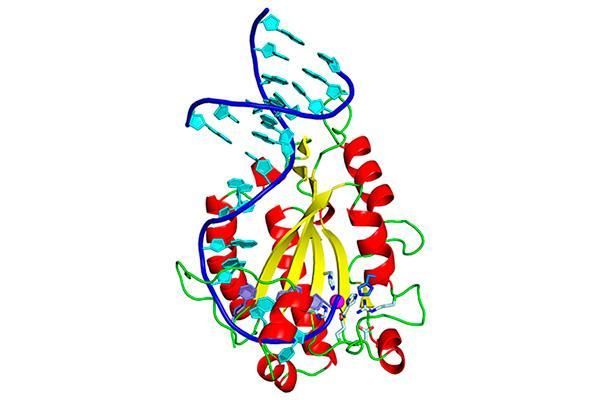 identificado un componente clave en el mecanismo de diseminacin de resistencia a los antibiticos