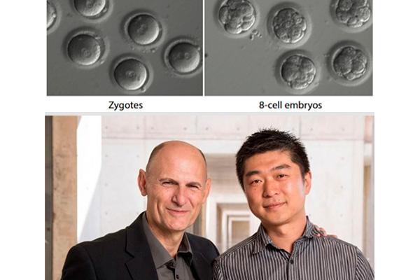 hito cientifico al borrar una mutacion genetica en embriones humanos