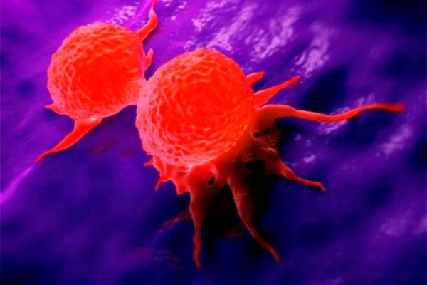 un compuesto natural marino inhibe la liberacion de citoquinas en el cancer de mama