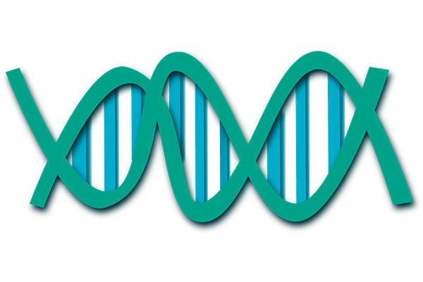 un mtodo acelera el mapeo de genes en la materia oscura del adn