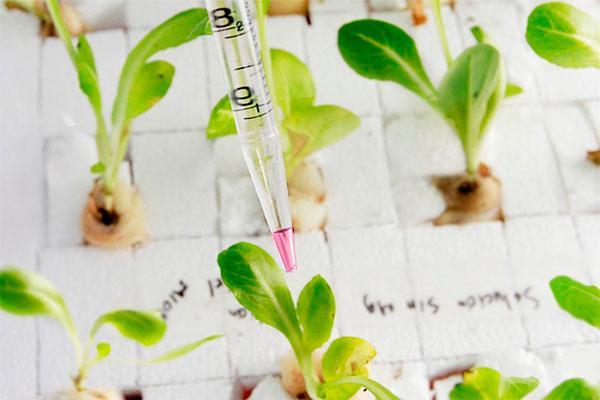 si no sabes qu hacer con tus ahorros considera invertir en biotecnologa