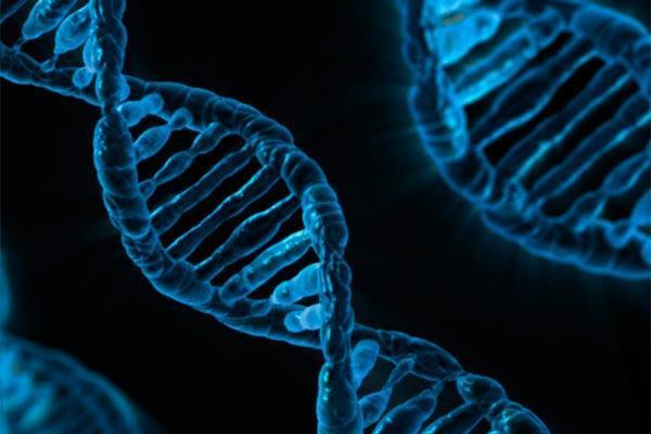 tratan por primera vez de editar el genoma de un paciente dentro de su cuerpo