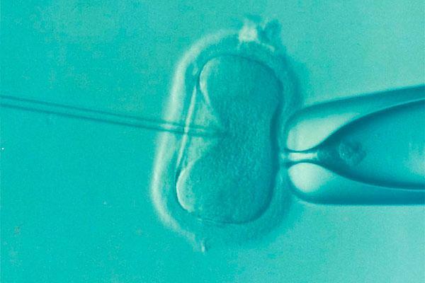 ms del 30 de los bebs espaoles nacer gracias a una donante de vulos