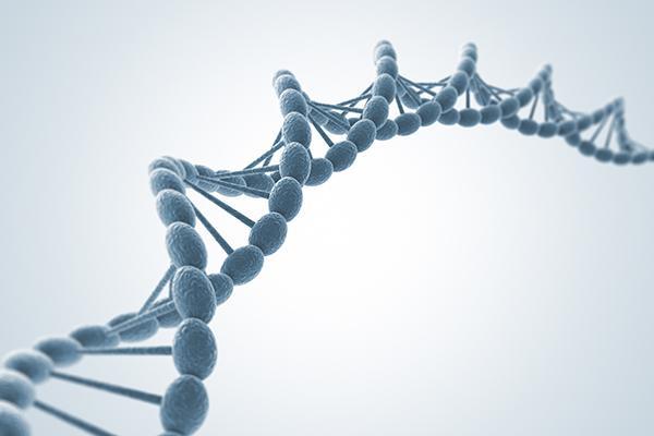 identificado un mecanismo de control que coordina los procesos de replicacin y de transcripcin del adn