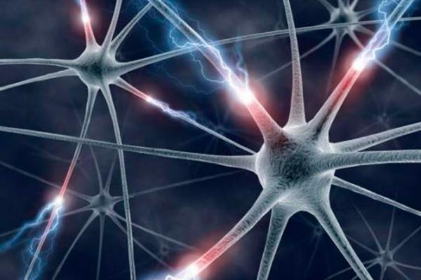 un nuevo trazador mide el dano causado por la esclerosis multiple en modelos animales