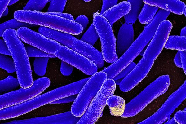 primer antibitico sinttico activo frente a bacterias resistentes