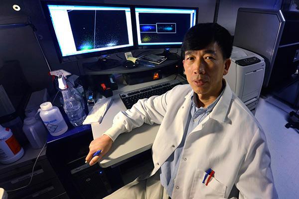 los genes de raton ayudan a los linfocitos t humanos a combatir el cancer hepatico