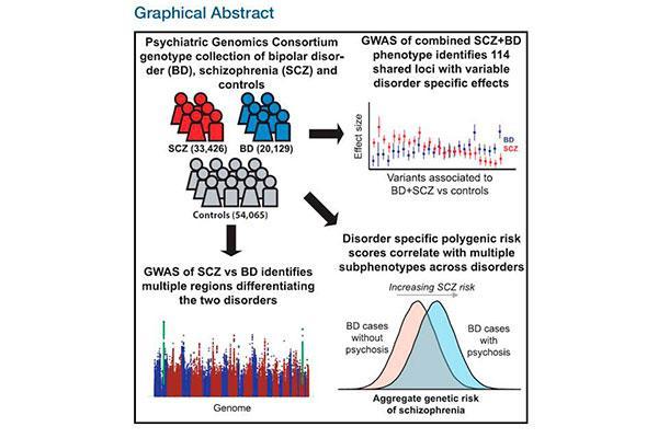 identifican regiones gnicas involucradas en las similitudes y diferencias entre el trastorno bipolar y la esquizofrenia