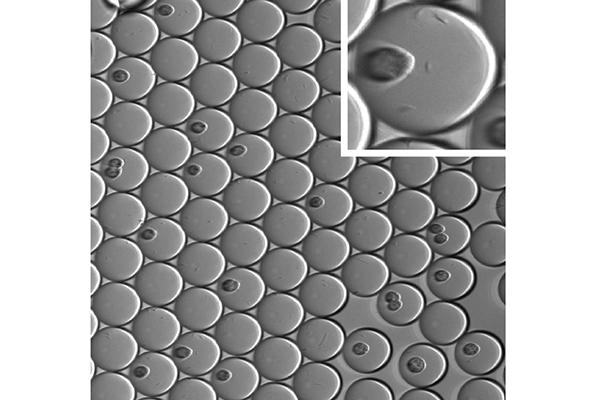 los miniecosistemas ayudaran a identificar con mayor rapidez nuevas moleculas terapeuticas