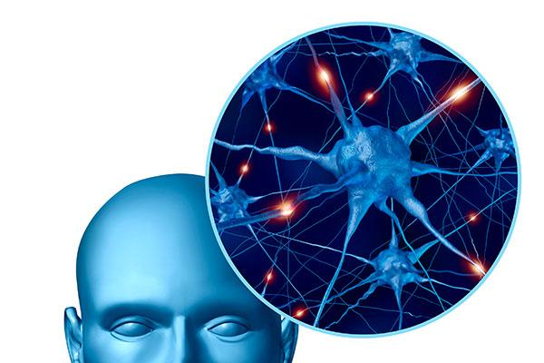 nuevo papel de la vasculatura meningea en la patogenesis de la esclerosis multiple