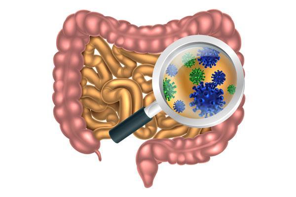 la-importancia-de-la-microbiota-intestinal