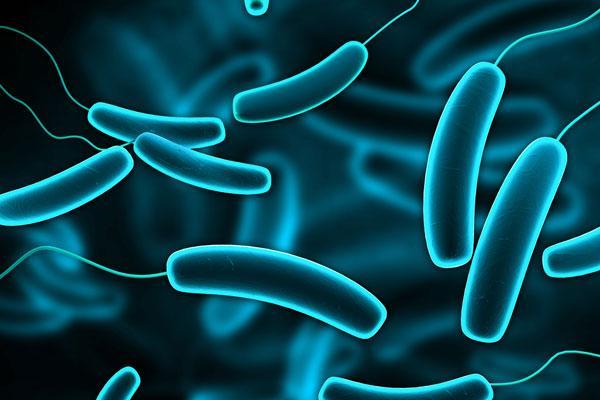 la microbiota intestinal en los dos primeros dos aos de vida predice la obesidad infantil