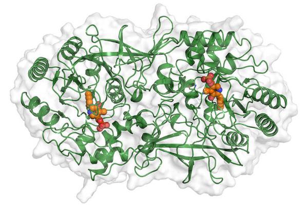 nuevo objetivo en la lucha contra las resistencias bacterianas