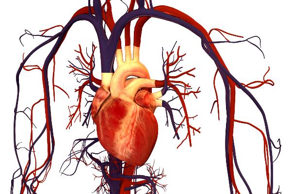 la presion arterial elevada antes de los 40 anos de edad aumenta el riesgo de accidentes cardiovasculares