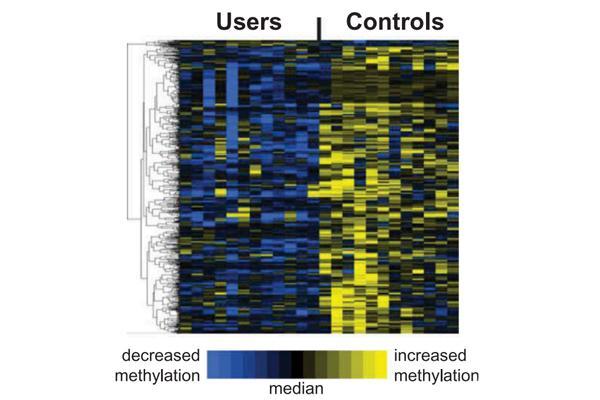 el-cannabis-modifica-el-patron-epigenomico-en-el-semen-humano