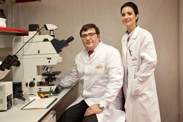 confirman el nexo entre el cancer de prostata mas agresivo y el cancer de mama hereditario