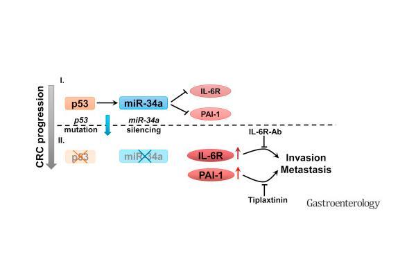 la-funcion-de-2-gene
