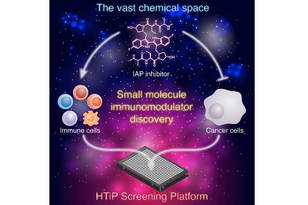 los inmunomoduladores de molcula pequea ofrecen potencial en el cncer
