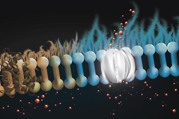 un-antibiotico-comun-ofrece-potencial-en-la-fibrosis-quistica