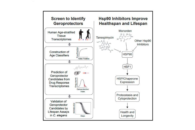 el transcriptoma contiene la clave de la longevidad en buen estado de salud