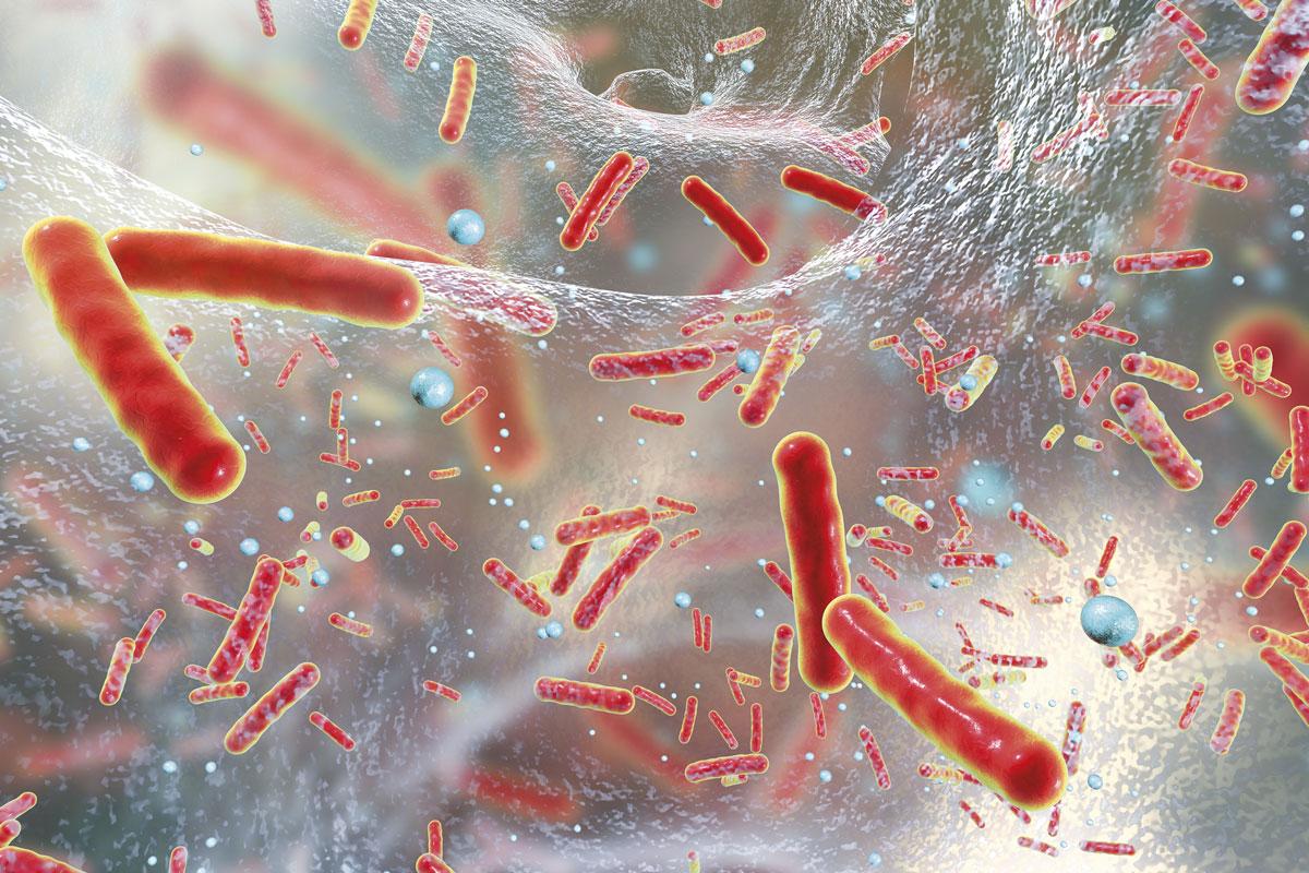 avances-en-el-tratamiento-de-las-neumonias-causadas-por-bacterias-gra