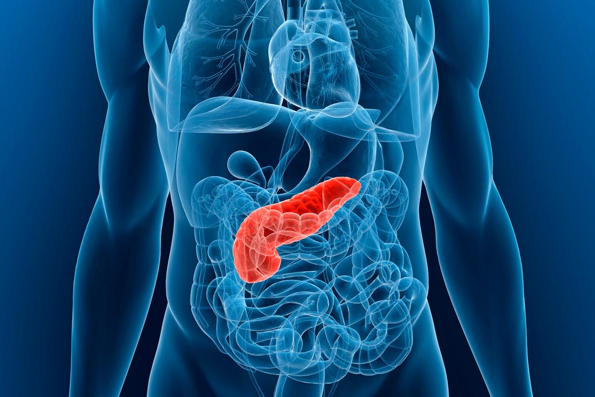 un-factor-paracrino-pancreatico-es-esencial-en-el-crecimiento-tumoral