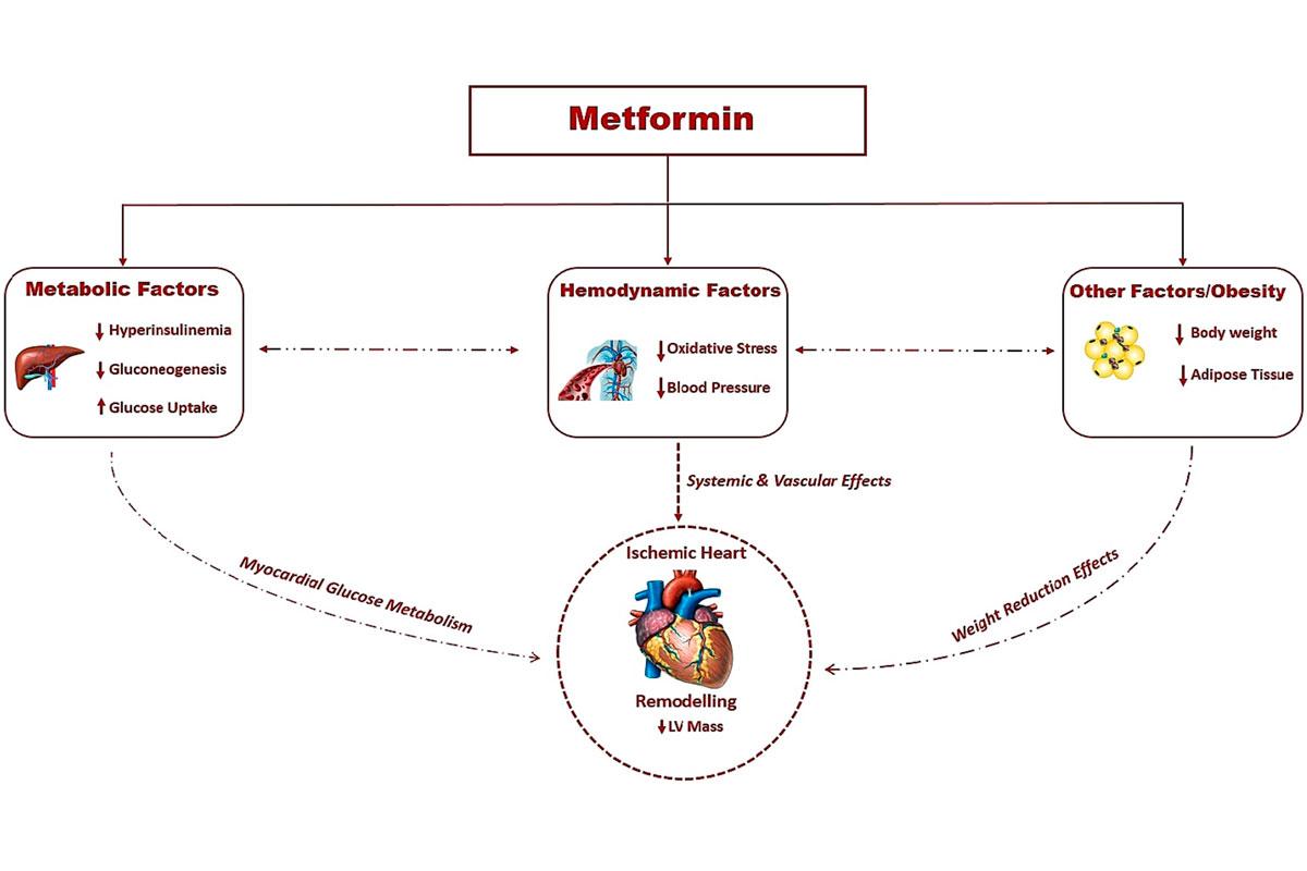 la-metformina-podria-ofrecer-beneficio-tambien-en-la-enfermedad-coro