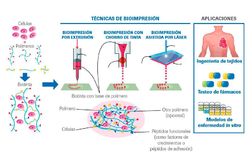 la-bioimpresion-clave-para-la-medicina-del-futuro