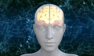 identifican-una-proteina-clave-en-el-desarrollo-de-la-hidrocefalia