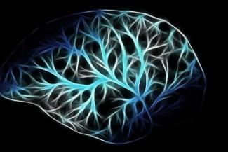 biodonostia-participa-en-dos-estudios-internacionales-sobre-ela-y-alzh