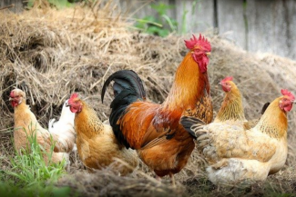 china-notifica-el-primer-caso-de-gripe-aviar-h10n3-en-humanos