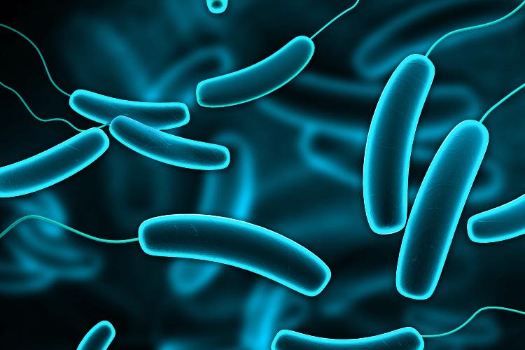 farmacos-comunes-pierden-eficacia-al-ser-acumulados-por-las-bacterias-intestinales