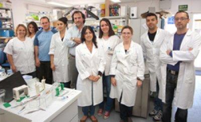 estudian la implicacion de oligodendrocitos en la esclerosis multiple