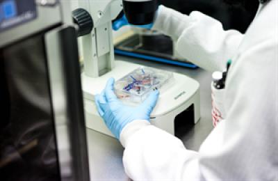 acuerdo entre andaluca y el instituto carlos iii para impulsar la investigacin en clulas madre