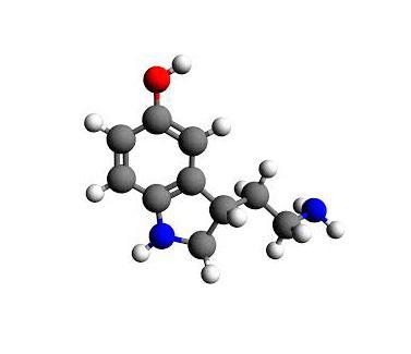 la ausencia de serotonina altera el desarrollo y la funcioacuten de los circuitos cerebrales