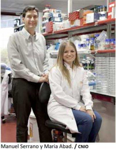 cientficos espaoles consiguen reprogramar clulas adultas y convertirlas en clulas madre embrionarias