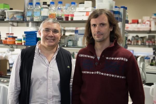 el cliacutenicidibaps consigue reducir la mortalidad de ratones con sepsis con una nueva terapia complementaria