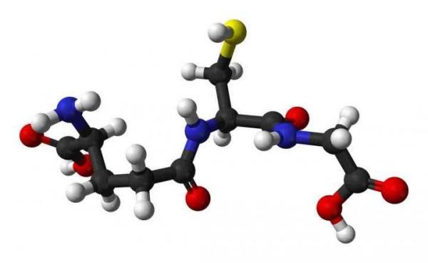 la-concentracion-del-antioxidante-glutation-ayuda-a-resistir-el-declive-asociado-al-envejecimiento