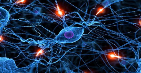 consiguen regenerar axones en el sistema nervioso adulto