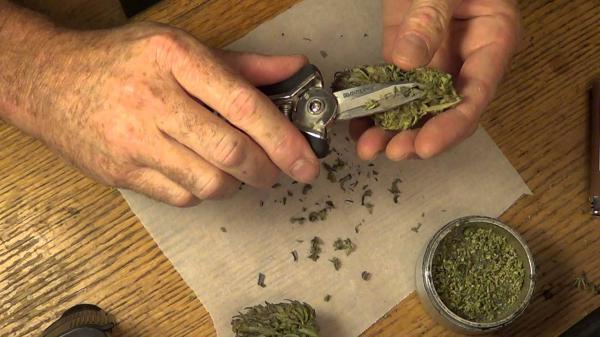 el-consumo-regular-de-cannabis-provoca-efectos-adversos-sobre-la-fertilidad-en-hombres-y-mujeres