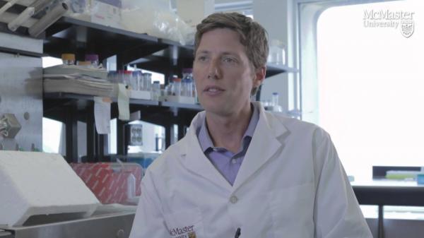 descubren un enzima clave en el mantenimiento de la fuerza muscular en la vejez